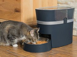 Keep your furry friends fed with the best automatic pet feeders