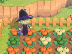 Here's how to get perfect pumpkins in Animal Crossing: New Horizons