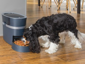 Best Smart Feeders for Dogs and Cats