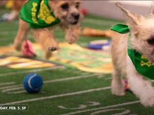 How to watch the Puppy Bowl on Super Bowl Sunday