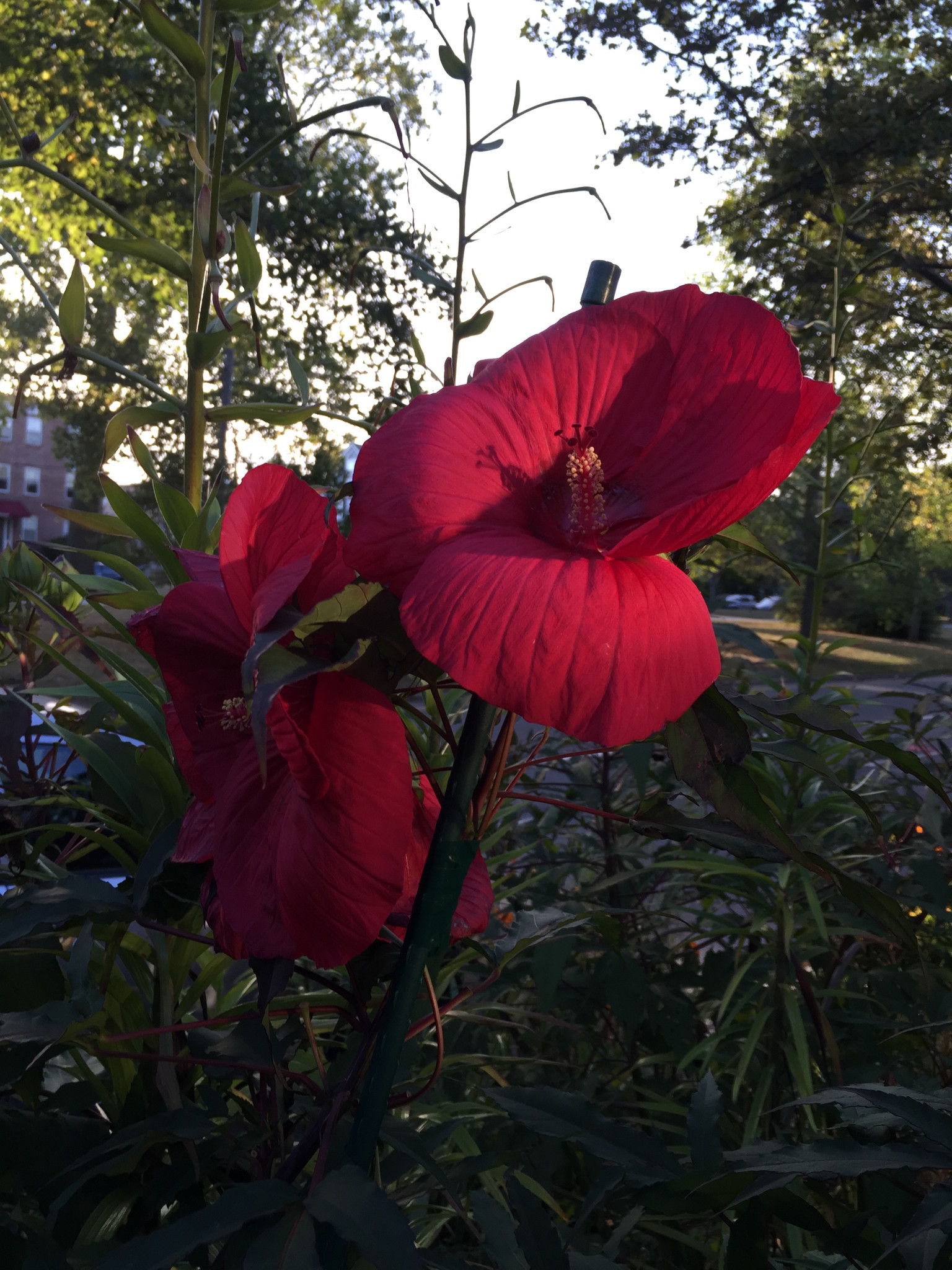 Camera tests battle of the 47 inch iphones 6 6s and 7 imore this photo of a red flower struck by direct sunlight showcases both the 6s and 7 quite nicely all three shot the flower at 1120th second shutter speed izmirmasajfo